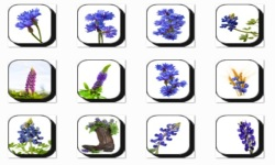 Bluebonnet Flowers Onet Classic Game screenshot 1/3