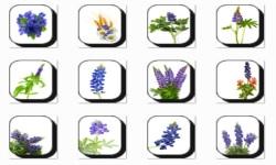 Bluebonnet Flowers Onet Classic Game screenshot 2/3