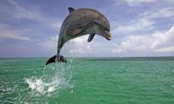 HQ Dolphin Live Wallpaper screenshot 1/4