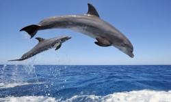 HQ Dolphin Live Wallpaper screenshot 3/4