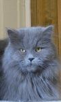 Blue Hair Kitty LWP screenshot 2/3