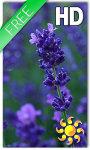Lavender Flowers LWP screenshot 1/2