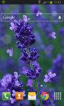 Lavender Flowers LWP screenshot 2/2