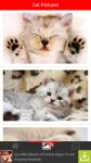 Cat Pictures screenshot 2/6