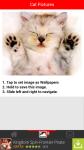 Cat Pictures screenshot 3/6