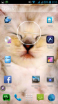Cat Pictures screenshot 6/6