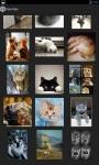Cute Pets Photo and Wallpaper screenshot 2/4