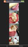 Cute Pets Photo and Wallpaper screenshot 4/4