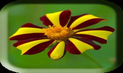 Flower images of wallpaper screenshot 1/4