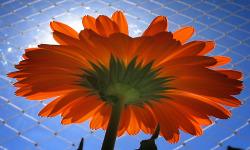 Flower images of wallpaper screenshot 4/4
