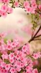 Spring Flowers Wallpaper Pic screenshot 1/6