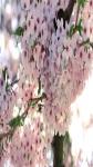 Spring Flowers Wallpaper Pic screenshot 3/6