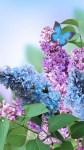 Spring Flowers Wallpaper Pic screenshot 4/6