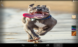 Funny Dogs Live screenshot 1/3