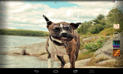 Funny Dogs Live screenshot 3/3