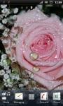 Beautiful Pink Rose Live Wallpaper screenshot 1/3
