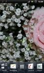Beautiful Pink Rose Live Wallpaper screenshot 2/3