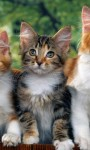 Cute Animals Babies Pictures Wallpaper screenshot 2/6