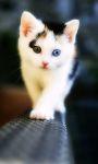 Cute Animals Babies Pictures Wallpaper screenshot 4/6