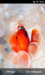 Clownfish LWP screenshot 2/3