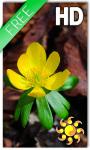 Spring Yellow Flower LWP screenshot 1/2