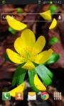 Spring Yellow Flower LWP screenshot 2/2