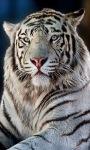 White Tiger Live Wallpape screenshot 1/3