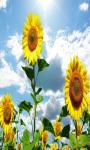 Sunflower Field Live Wallpaper Free screenshot 4/5