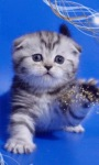Cute Kitten LWP screenshot 1/3