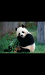 WILD AND CUTE ANIMAL HD WALLPAPER screenshot 4/6