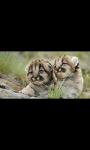 WILD AND CUTE ANIMAL HD WALLPAPER screenshot 5/6