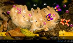 3D Cute Rabbit Live Wallpapers screenshot 2/4