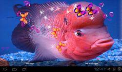 3D Flowerhorn Cichlid Live Wallpaper screenshot 3/5