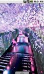 Sakura Blossom Flower Live Wallpaper screenshot 1/4