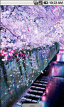 Sakura Blossom Flower Live Wallpaper screenshot 2/4