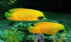 Yellow Fishes Live Wallpaper screenshot 2/3