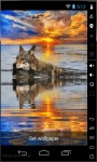 Swim Wolf Live Wallpaper screenshot 2/2