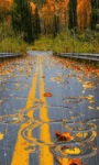 Autumn Rainy Road LWP screenshot 1/3