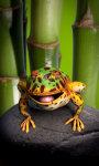 Toad live wallpaper Free screenshot 4/5