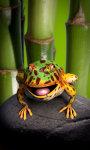 Toad live wallpaper Free screenshot 5/5
