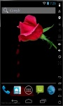 Crying Rose Live Wallpaper screenshot 2/2