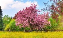 Beautiful Spring Mountain Views HD Wallpaper screenshot 2/6