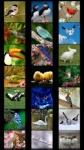 Birds Wallpapers by Nisavac Wallpapers screenshot 1/5
