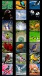 Birds Wallpapers by Nisavac Wallpapers screenshot 2/5
