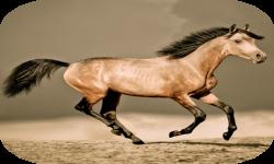 HQ Horses Live Wallpaper screenshot 2/4