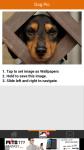 Dog Pic screenshot 3/6