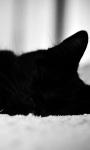 Black Cat Live Wallpaper screenshot 1/4