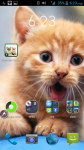 Kitten And Cat Pictures screenshot 4/4