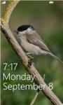 Birds Live HD Wallpapers screenshot 1/6