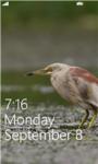 Birds Live HD Wallpapers screenshot 4/6